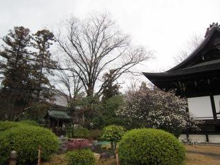 s-廣隆寺